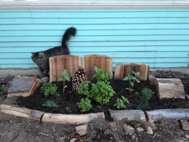 Herb Garden +Cat